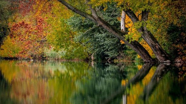 autumn-994897_640